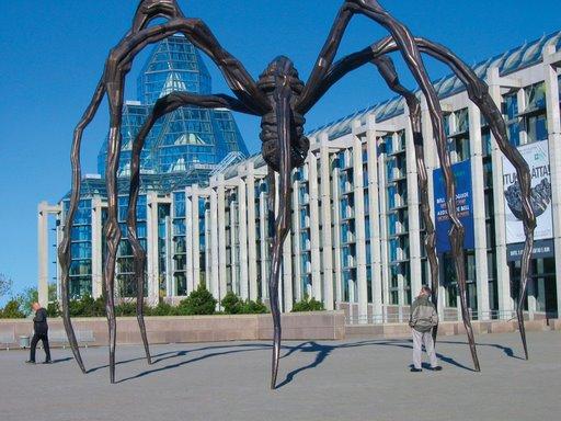 Canada Open Spider