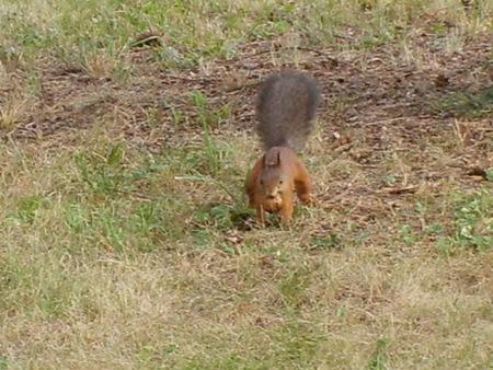 WWCC veverica